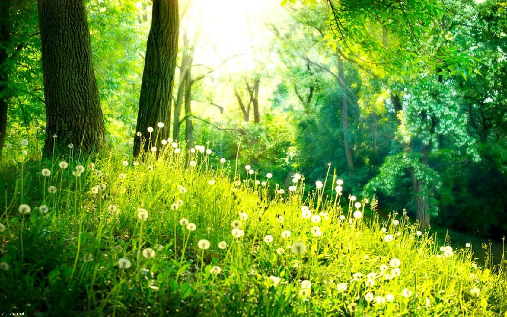 587281908-spring-forest-wallpaper