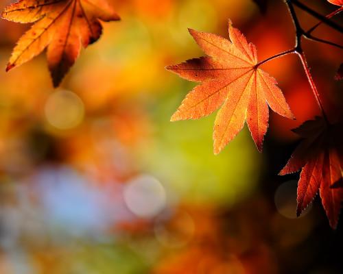 ősz Mátra