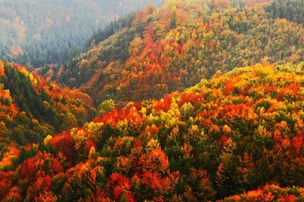 108633_autumn_forest